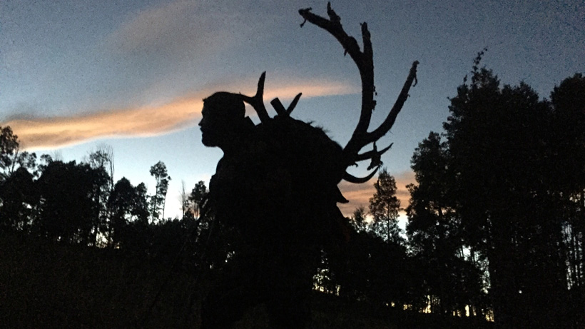 Sunset photo of Tyson Mackay packing out his Utah archery bull elk