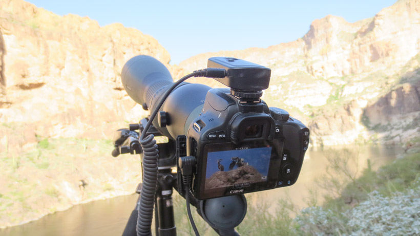 Swarovski digiscoping setup for hunting