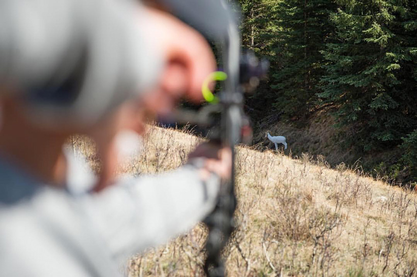 Target practice to simulate real hunting