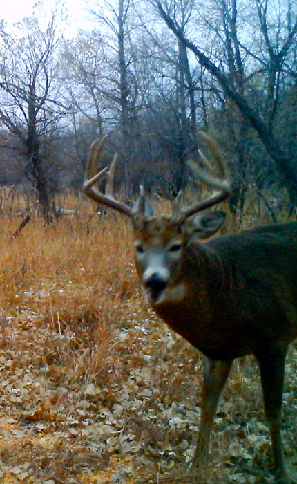 The Old 10 whitetail buck trail camera photo from 2014