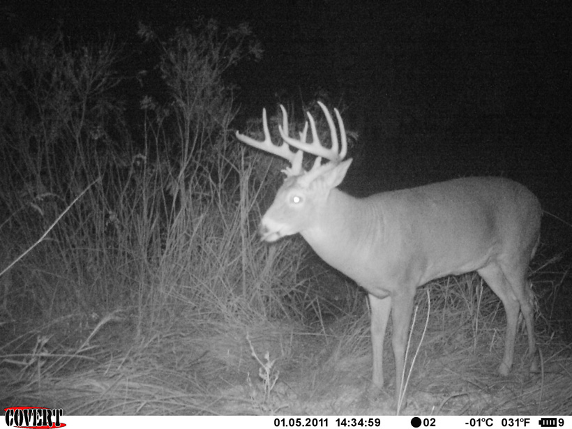 Getting the most out of your trail camera scouting | goHUNT