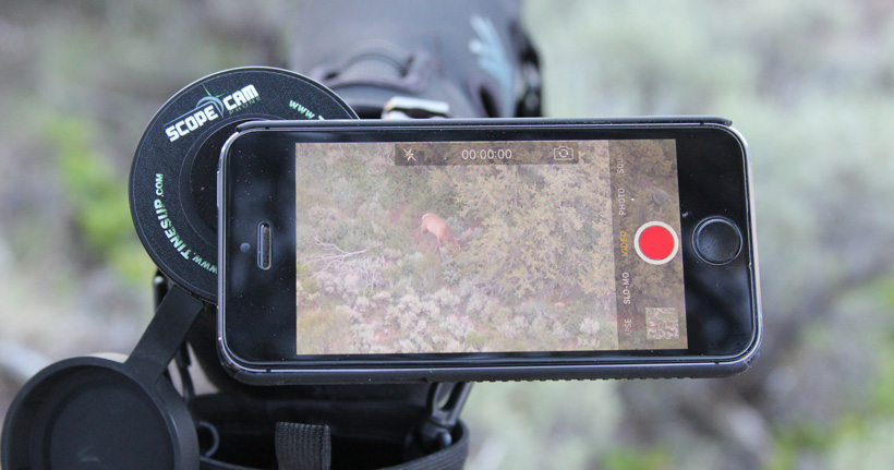Tines Up digiscoping video of bull elk