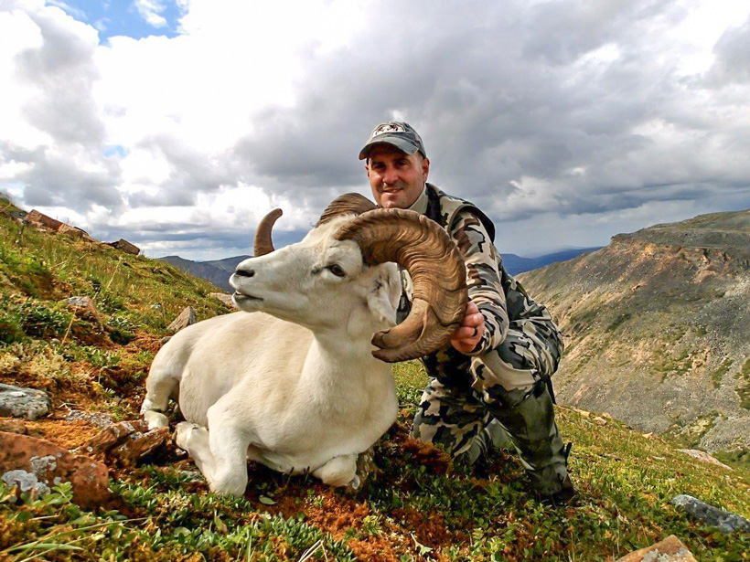 Side view of Tom's Dall sheep with Nahanni Butte Outfitters