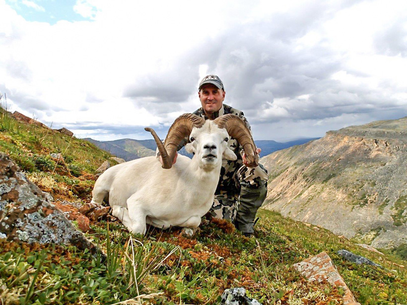 Front view of Tom's Dall sheep with Nahanni Butte Outfitters