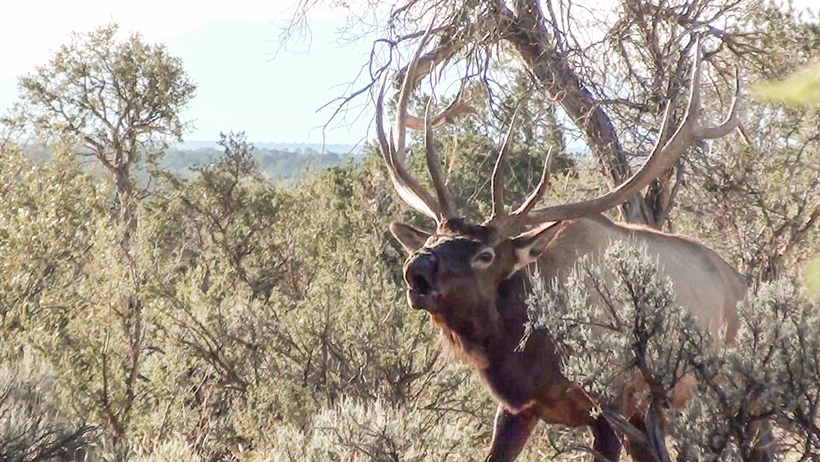 Top 15 Jay Scott Outdoors elk hunting podcast episodes