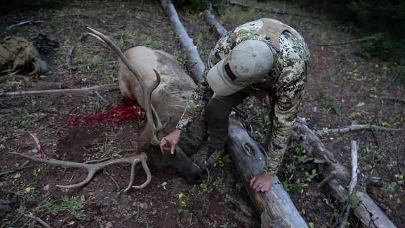 Trail Kreitzer walking up to archery elk