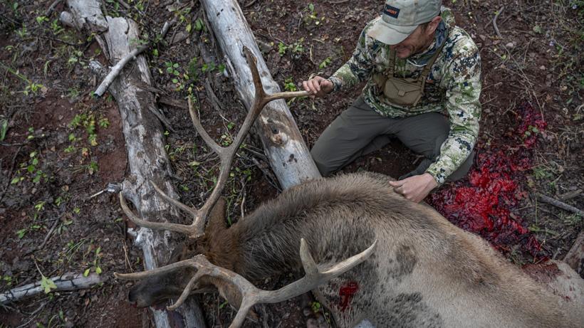 Trail's bull elk harvest