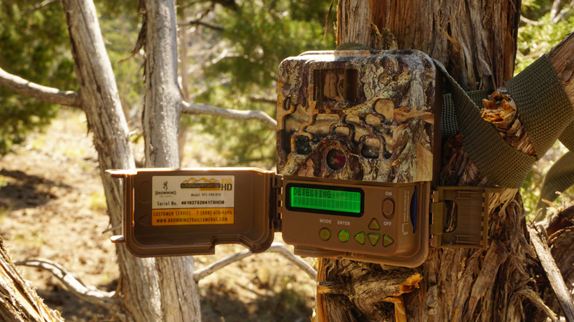 Trail camera placement on tree for scouting