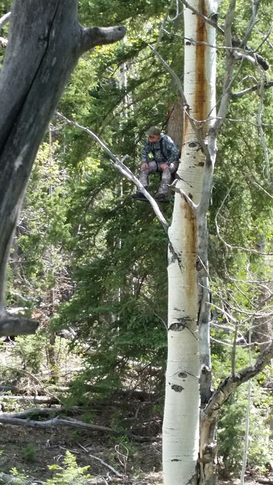 Treestand photo while bear hunting