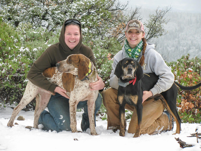Two bear hunting hounds in the snow