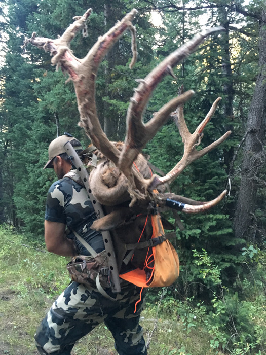 Tyson Mackay packing out his Utah archery bull elk