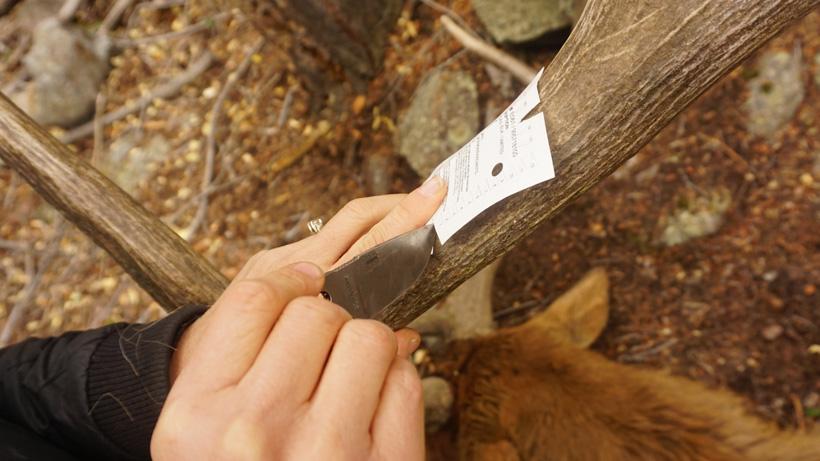 Tyto Esee Izula stainless steel knife