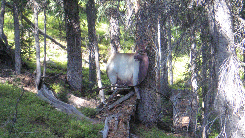 Using decoys for elk hunting