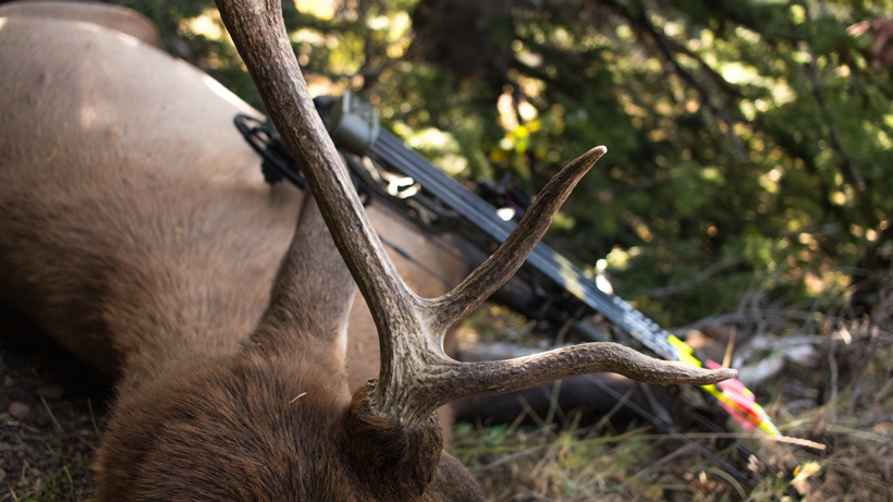 Using goHUNT Maps to plan elk hunt