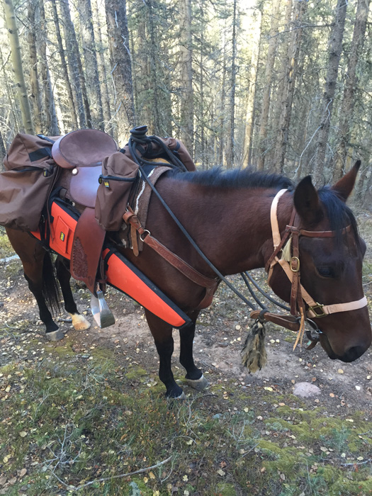 Using horses for elk hunting