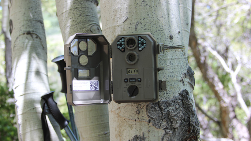 Using trail camera scouting for elk