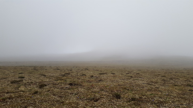 Usual view of fog on Dall sheep hunt
