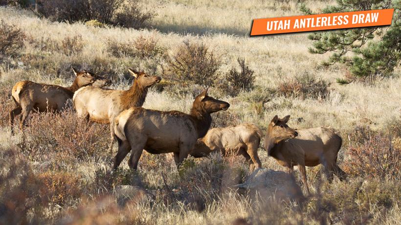 Utah antlerless draw information