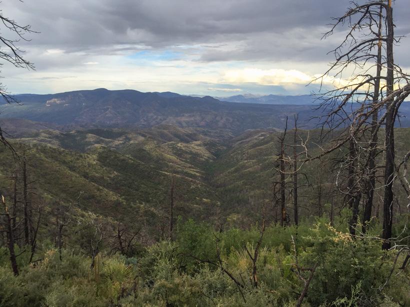 Arizona black bear hunting scenery