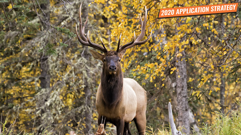 Utah 2020 elk and antelope application strategy