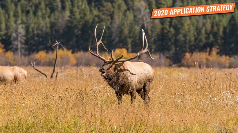 Utah elk and antelope application strategy 2020