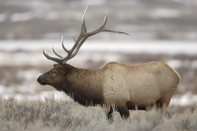 Utah extended hunt change
