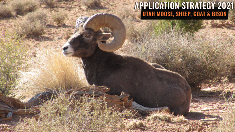 Application Strategy 2021: Utah Sheep, Moose, Goat & Bison