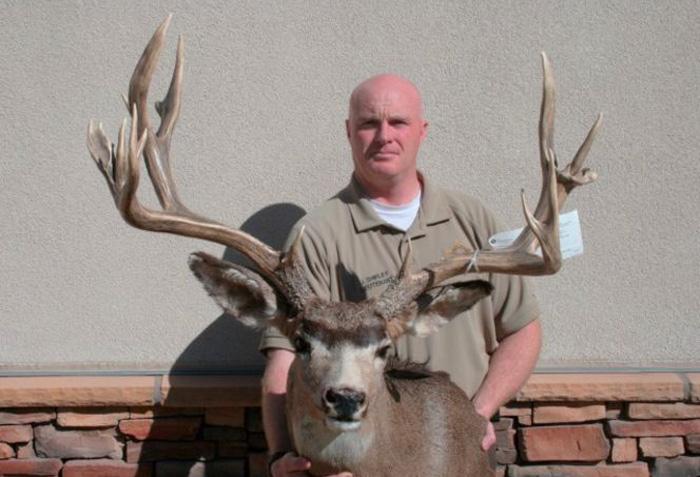 Utah poached mule deer buck
