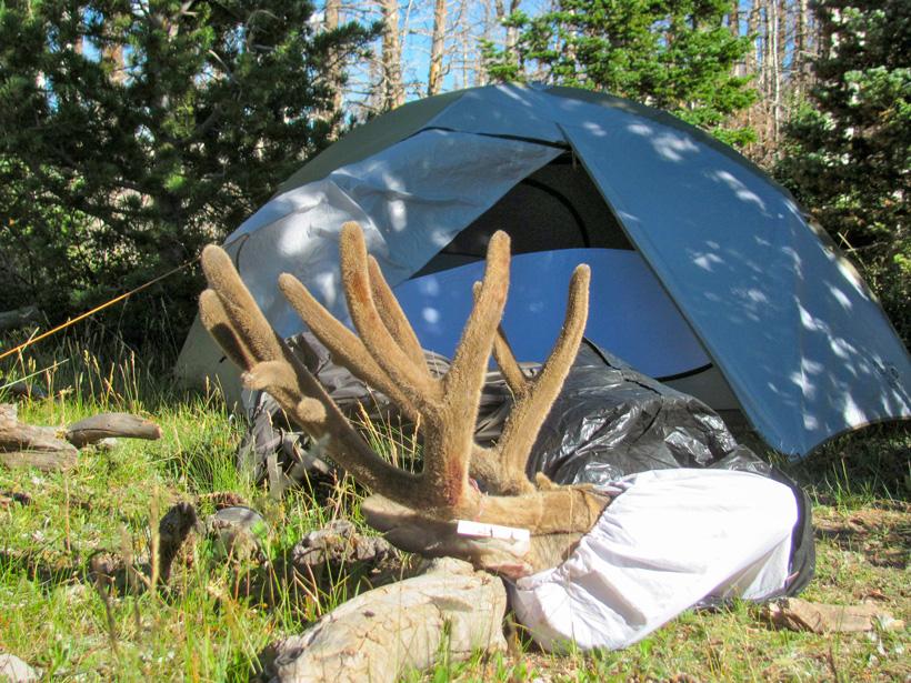 Velvet buck back at camp