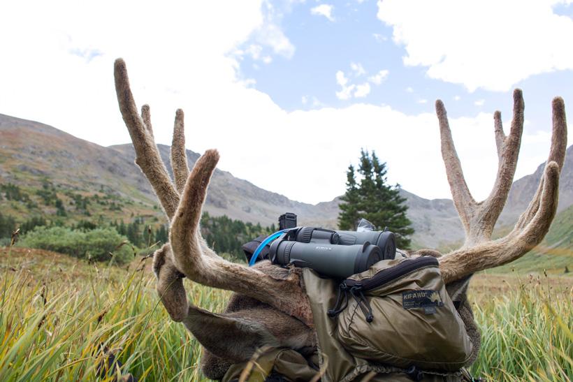 Velvet mule deer buck on Kifaru backpack