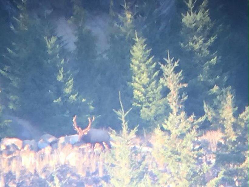 Video screenshot of Nick Schmits Washington bull elk