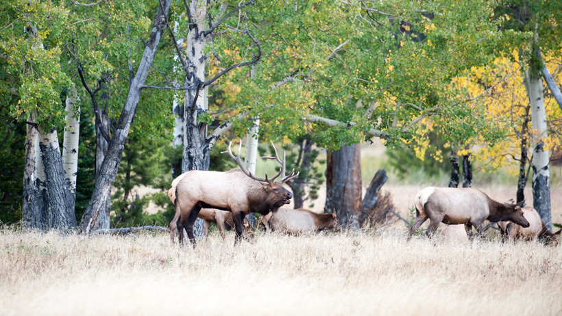 Wyoming confirms CWD in two new hunt areas
