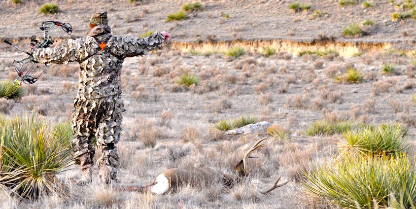 Walking up to an archery mule deer buck