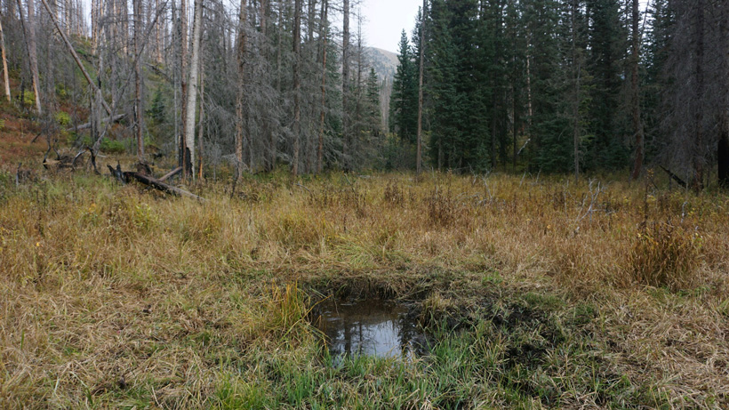 Wallow trail camera location