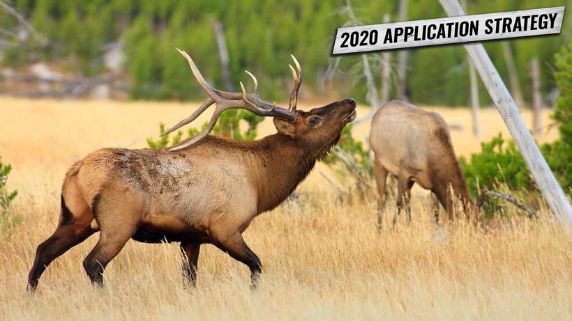 Washington elk and deer application strategy 2020