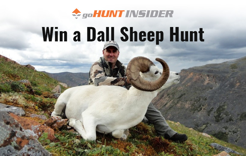 Win a Dall sheep hunt with goHUNT INSIDER