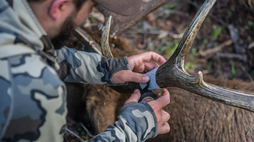 Wrapping hunting tag around an elk antler