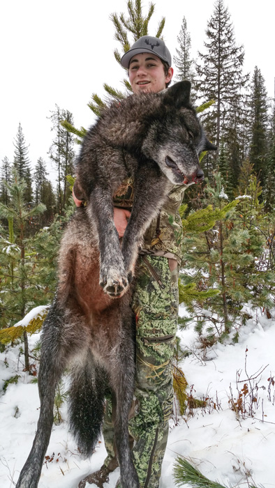 Wyatt ODay holding up his Montana wolf front view