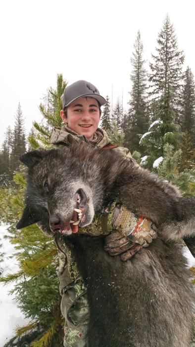 Wyatt ODay holding up his Montana wolf