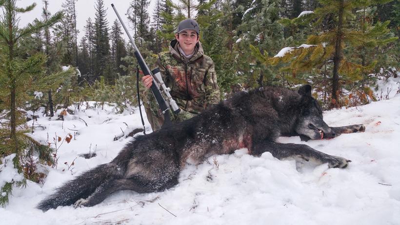 Wyatt ODay with his Montana wolf