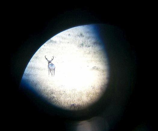 Wyoming antelope buck through spotting scope