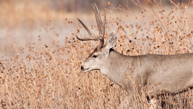Wyoming CWD management plan underway