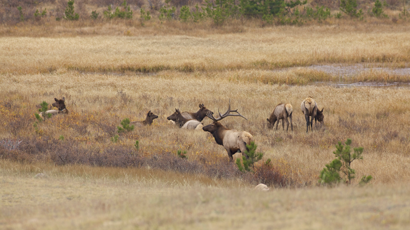 Emergency elk feeding approved in Bridger-Teton National Forest