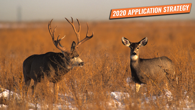 2020 Wyoming deer and antelope application strategy