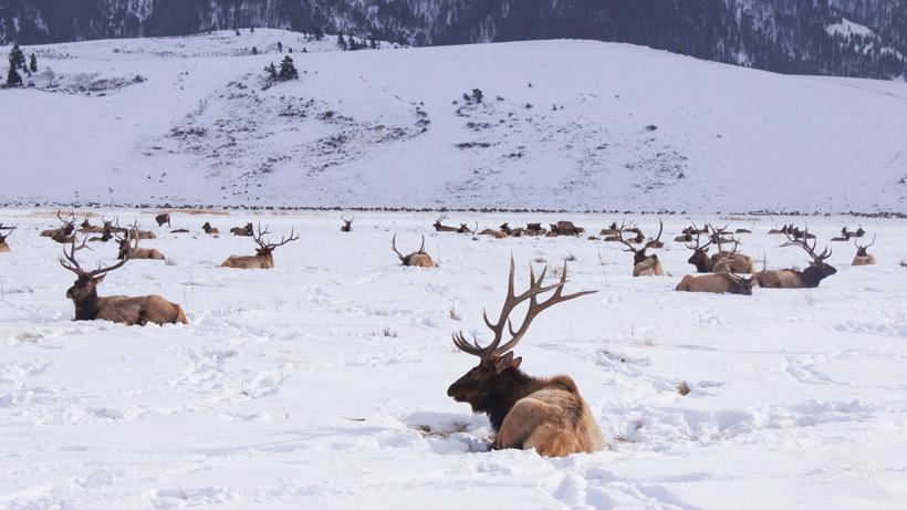 Wyoming elk feedground lawsuit