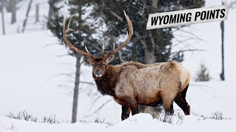 Wyoming hunting preference points application process