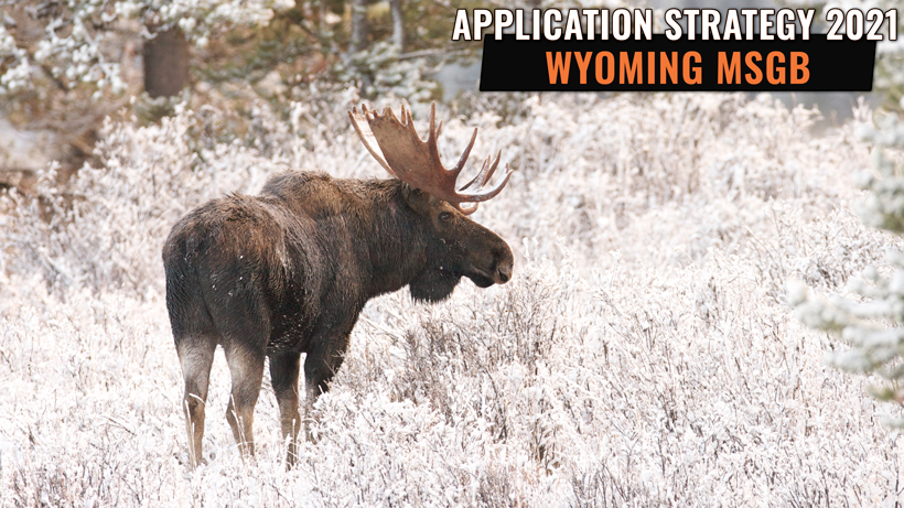 Application Strategy 2021: Wyoming Sheep, Moose, Goat and Bison