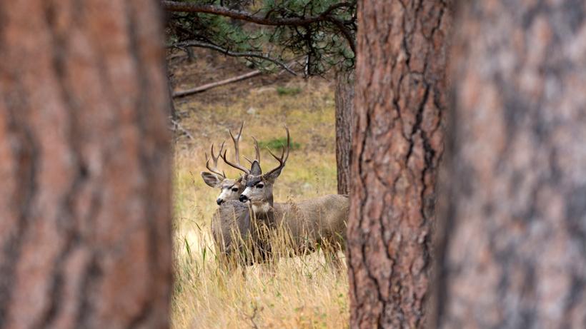 Habitat project helps Wyoming mule deer