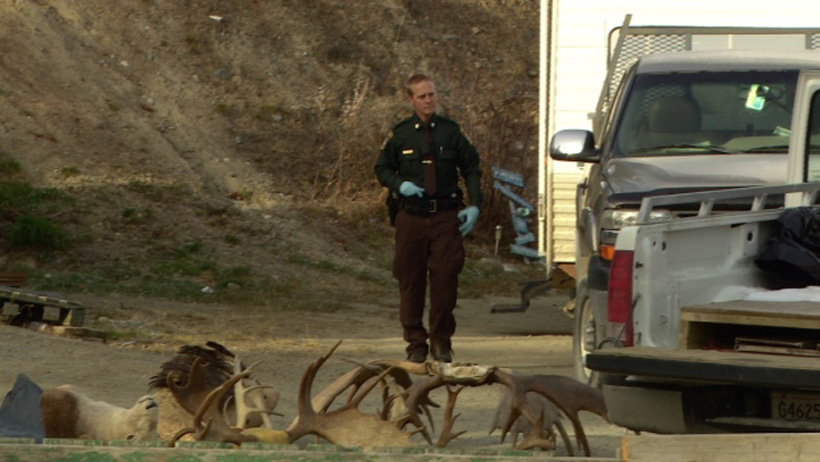 Yukon poaching incident