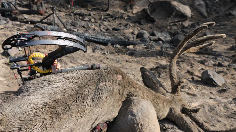 Zach Kenner archery velvet mule deer close up